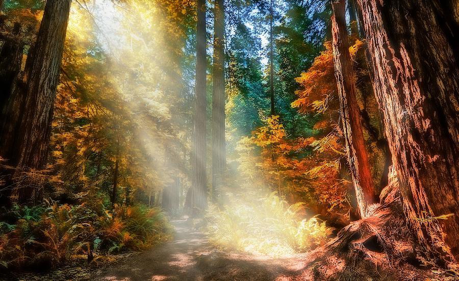 Fall Photograph - Amongst Giants  by Thomas Born