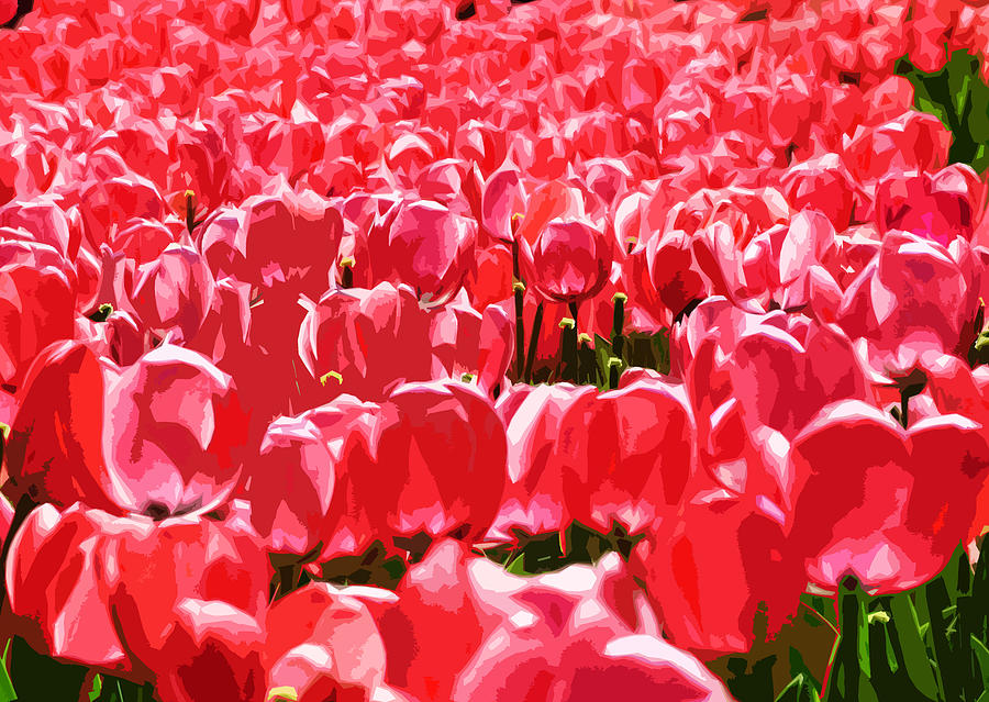 Amsterdam Tulips Digital Art