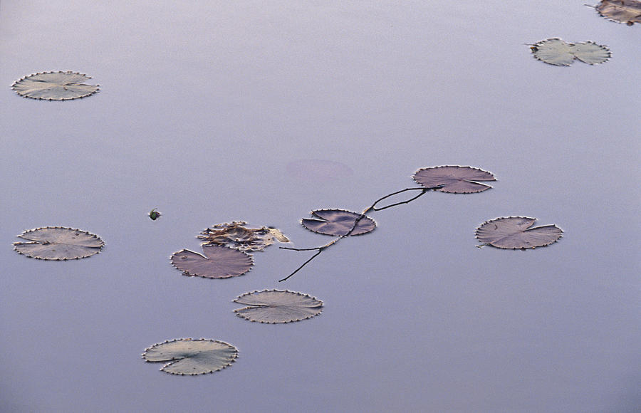 An Artistic Arrangement Of Floating Photograph