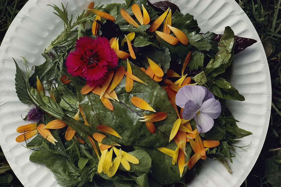 An Edible Salad At The Tilth Harvest Photograph