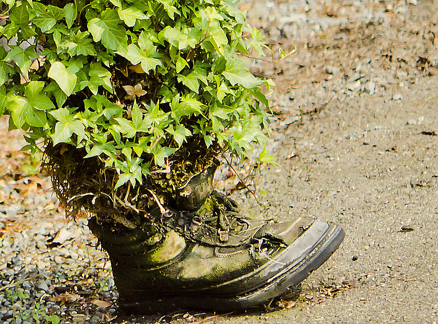 An Old Garden Shoe-pot Photograph  - An Old Garden Shoe-pot Fine Art Print