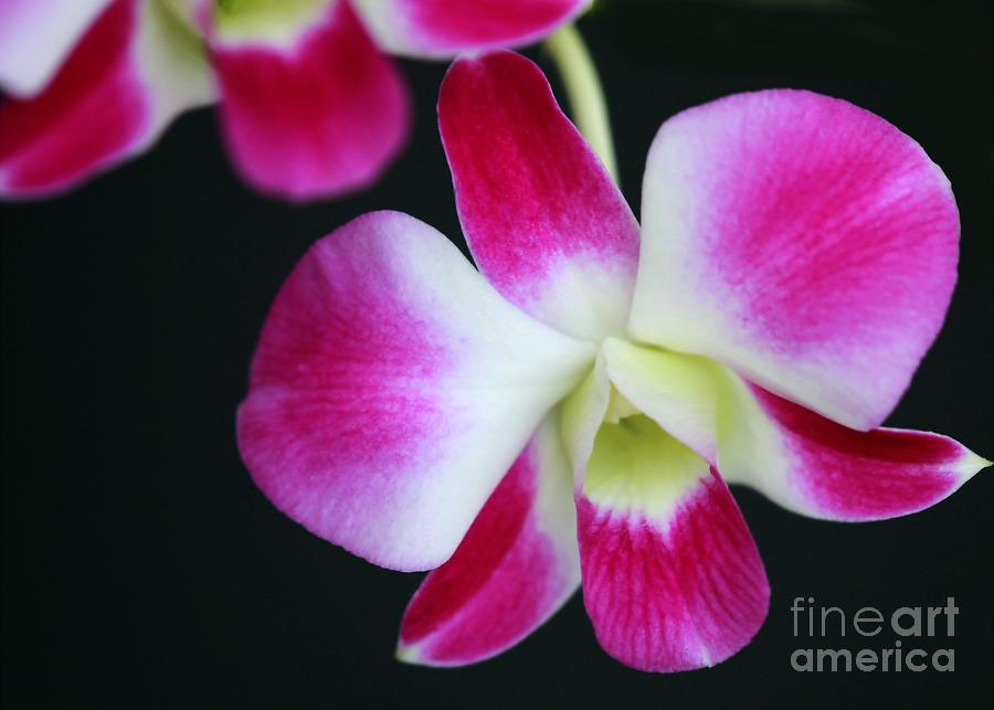 An Orchid Photograph