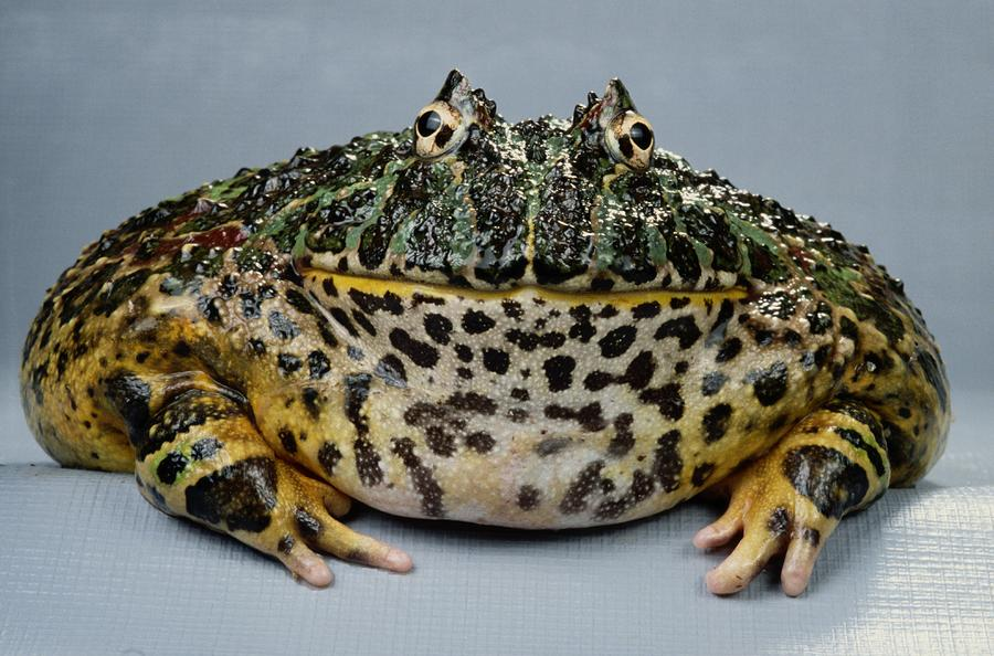 Frog Store Ceramic frog statues and decorative figurines