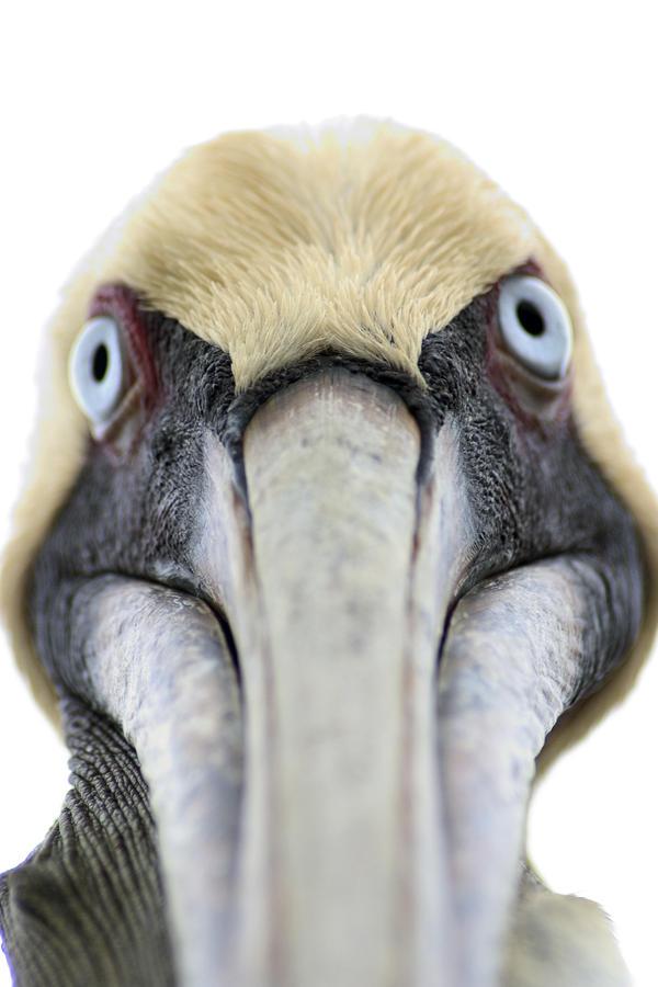An Unusual Bird Photograph