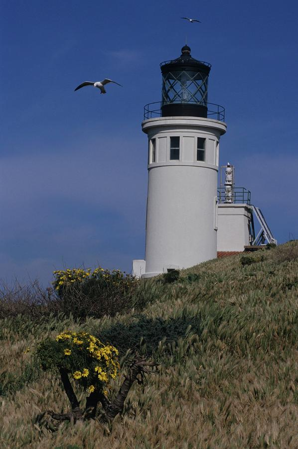 Anacapa Lighthouse And Western Gulls Photograph