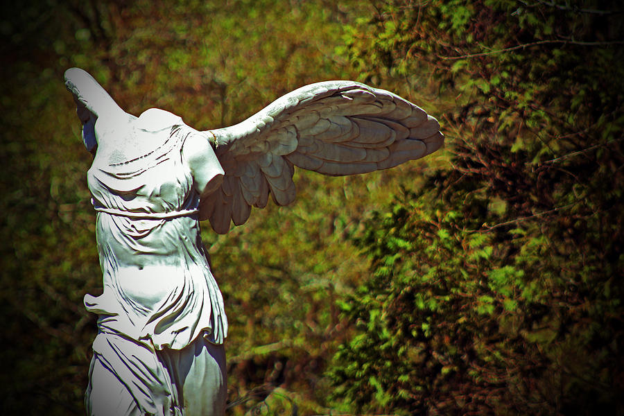 Ancient Flight Photograph  - Ancient Flight Fine Art Print