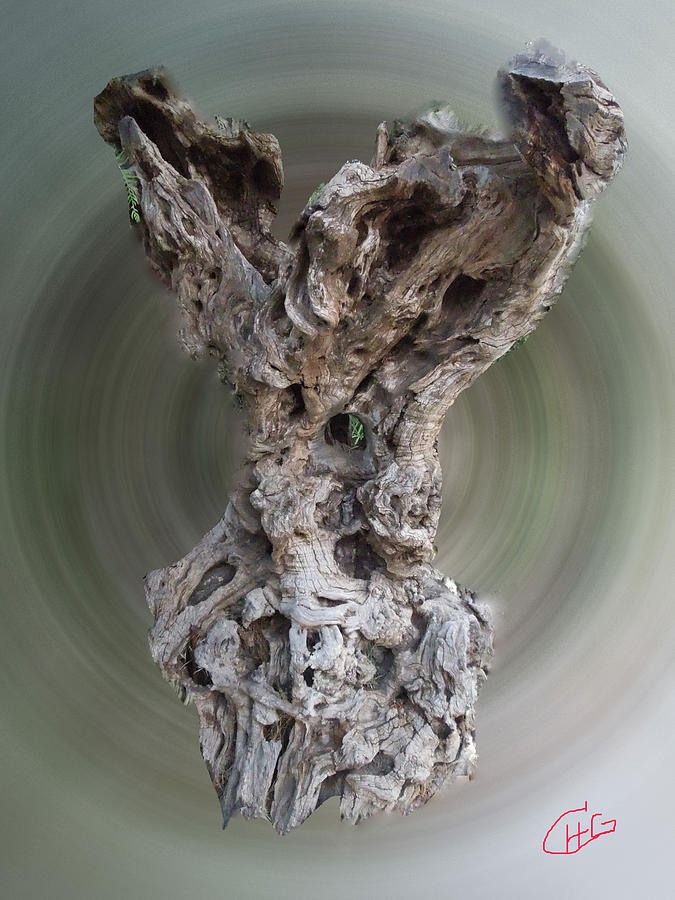 Ancient Old Olive Tree Photograph