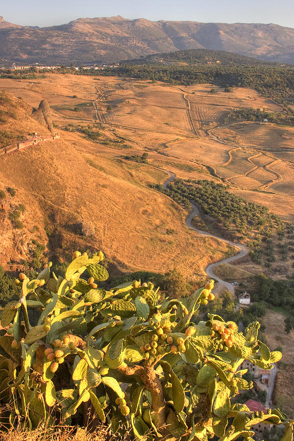 Andalucian Golden Valley Photograph