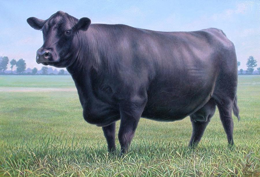 Angus Cow 981 2007 Painting