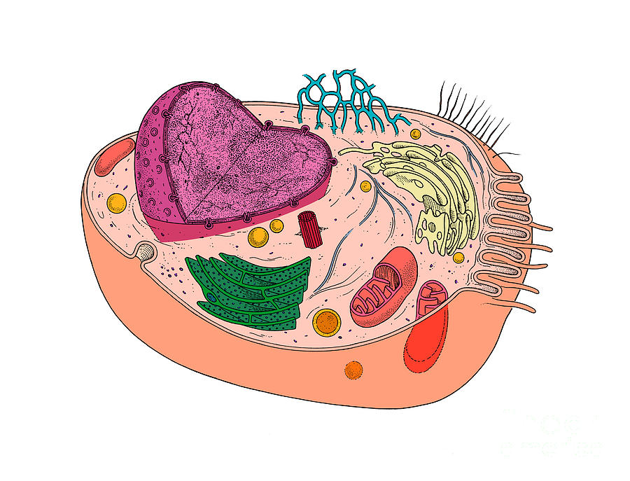 Animal cell model diagram project parts structure labeled coloring animal cell model diagram project parts structure labeled coloring and plant cell organelles cake animal cell diagram animal cell model diagram project ccuart Image collections