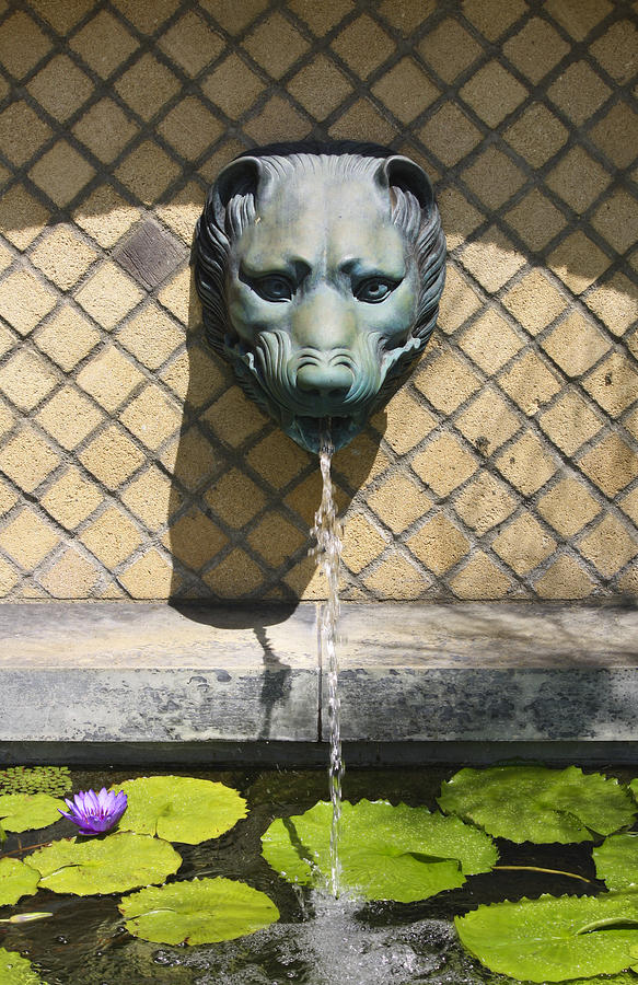 Animal Fountain Head Photograph  - Animal Fountain Head Fine Art Print
