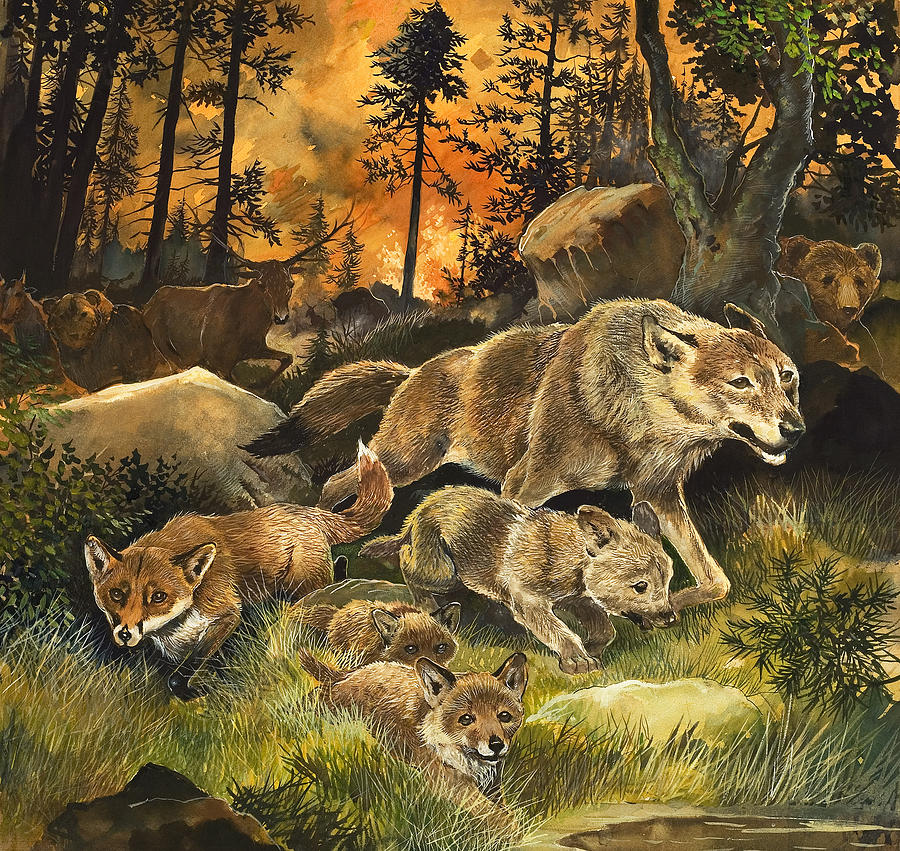 Animals United In Terror As They Flee From A Forest Fire Painting  - Animals United In Terror As They Flee From A Forest Fire Fine Art Print