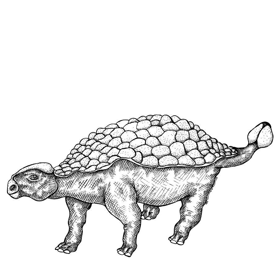 Ankylosaurus - Dinosaur Drawing