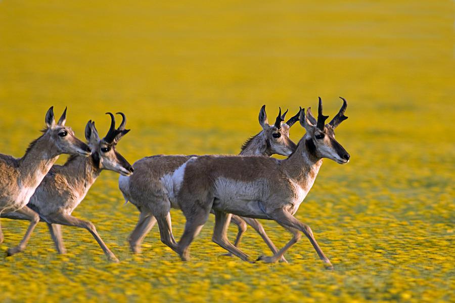 spring wildflowers in antelope - photo #2
