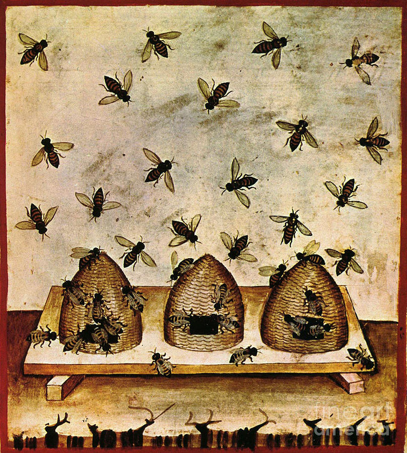 Apiculture-beekeeping-14th Century Photograph