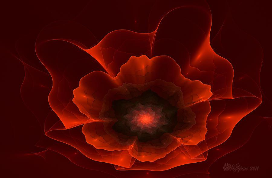 Apo Oriental Poppy Photograph