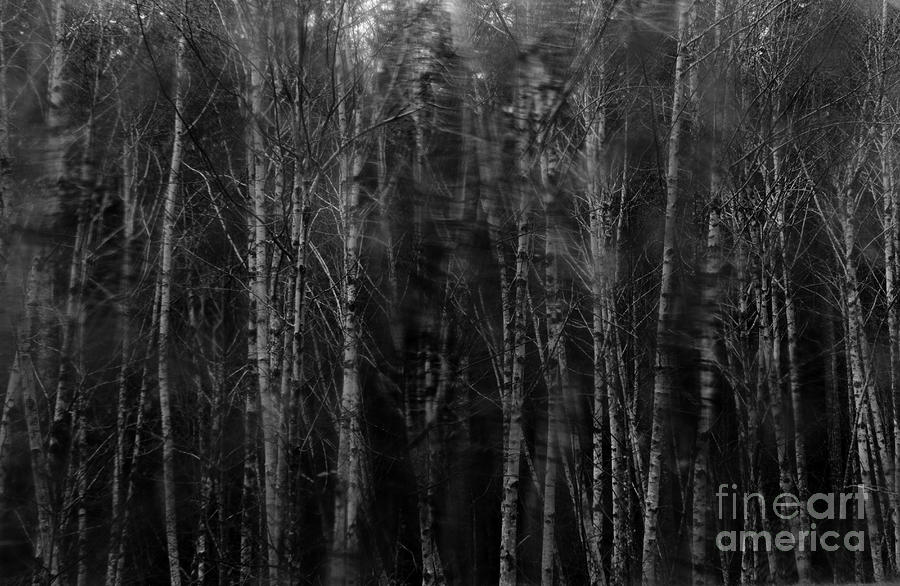 Apparition Photograph  - Apparition Fine Art Print
