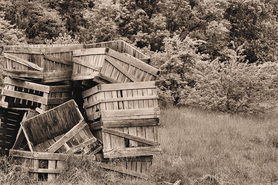 Apple Crates Sepia Photograph