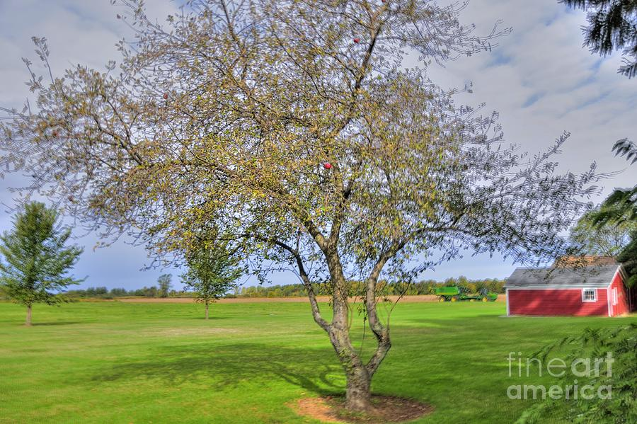 Apple Tree Photograph  - Apple Tree Fine Art Print