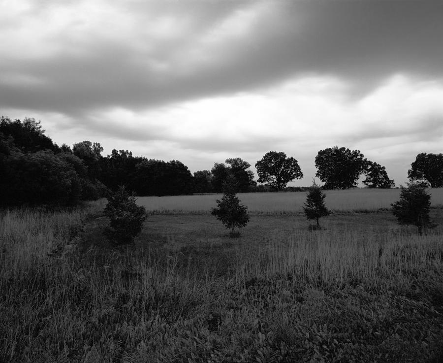 Approaching Storm Over Tree Farm Photograph