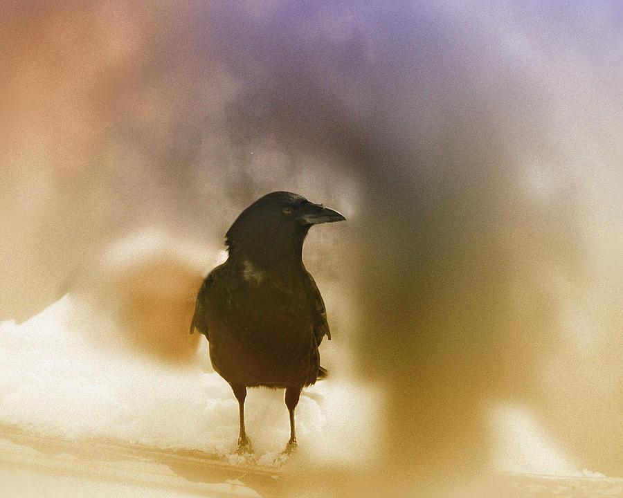 Raven Photograph - April Raven by Susan Capuano