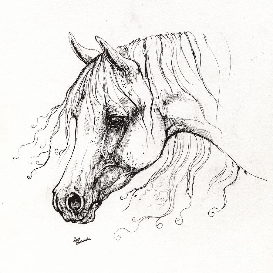 Line Drawing Horse Tattoo : Arabian horse drawing by angel tarantella