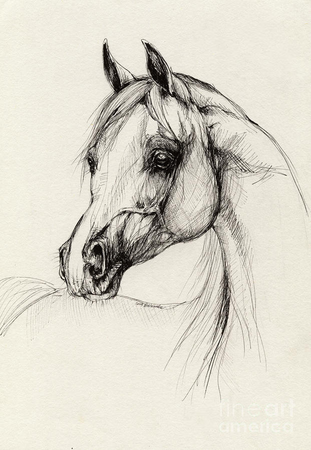 Arabian Horse Drawing 27 Drawing  - Arabian Horse Drawing 27 Fine Art Print