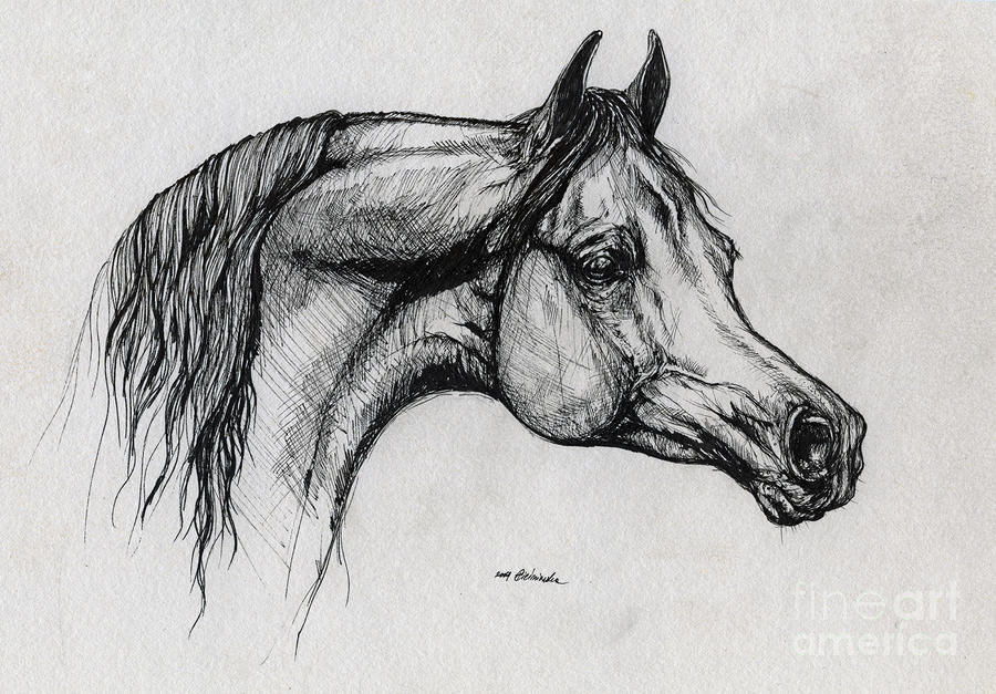Running arabian horse drawing - photo#10