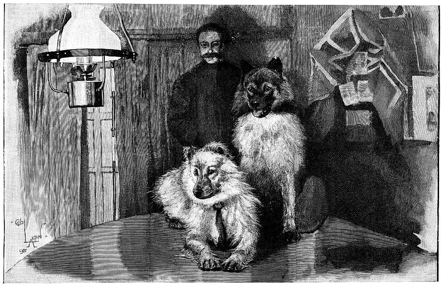 Arctic Explorer And Dogs, 19th Century Photograph  - Arctic Explorer And Dogs, 19th Century Fine Art Print