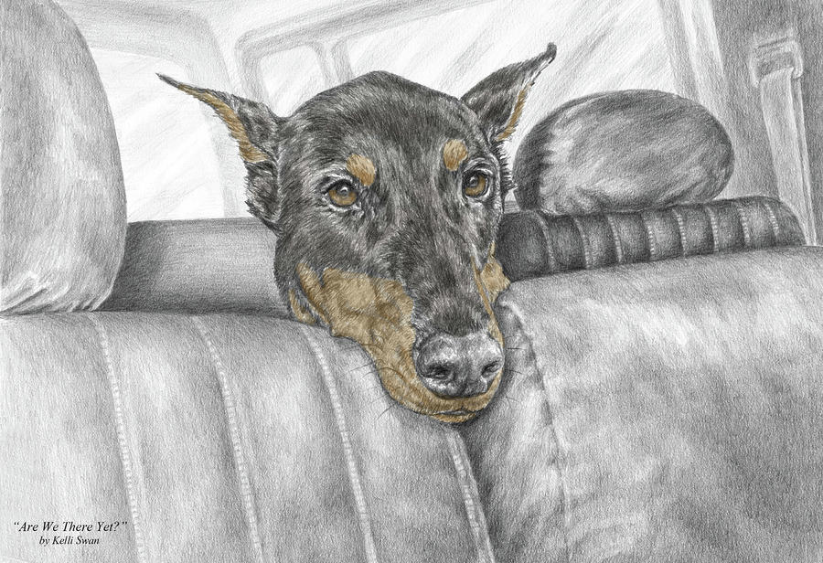 Are We There Yet - Doberman Pinscher Dog Print Color Tinted Drawing  - Are We There Yet - Doberman Pinscher Dog Print Color Tinted Fine Art Print