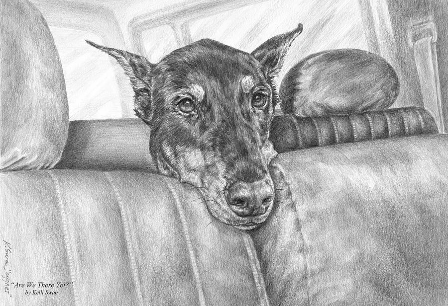 Are We There Yet - Doberman Pinscher Dog Print Drawing  - Are We There Yet - Doberman Pinscher Dog Print Fine Art Print