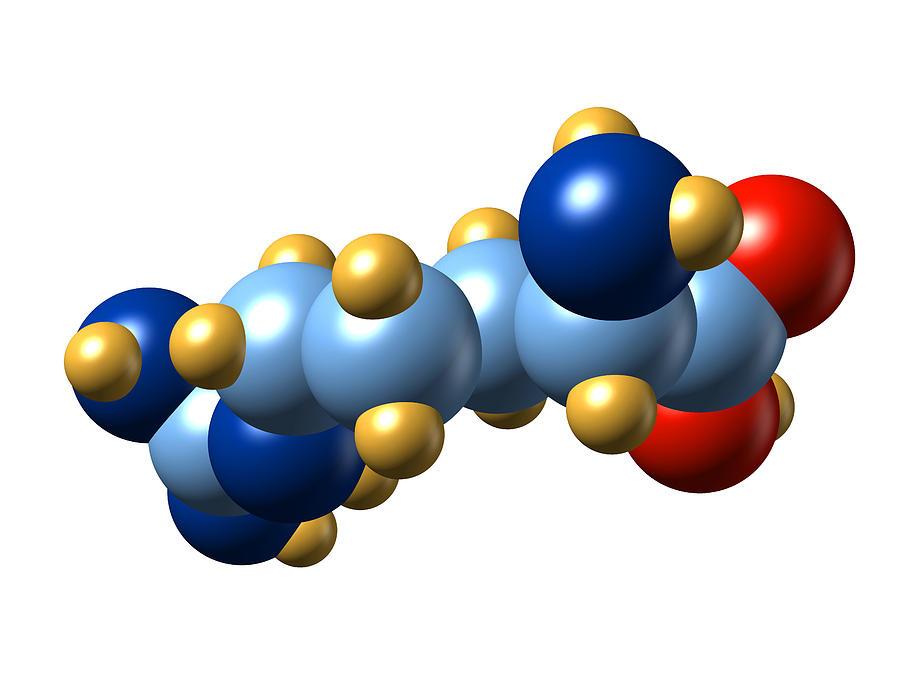 Arginine Photograph - Arginine, Molecular Model by Dr Mark J. Winter