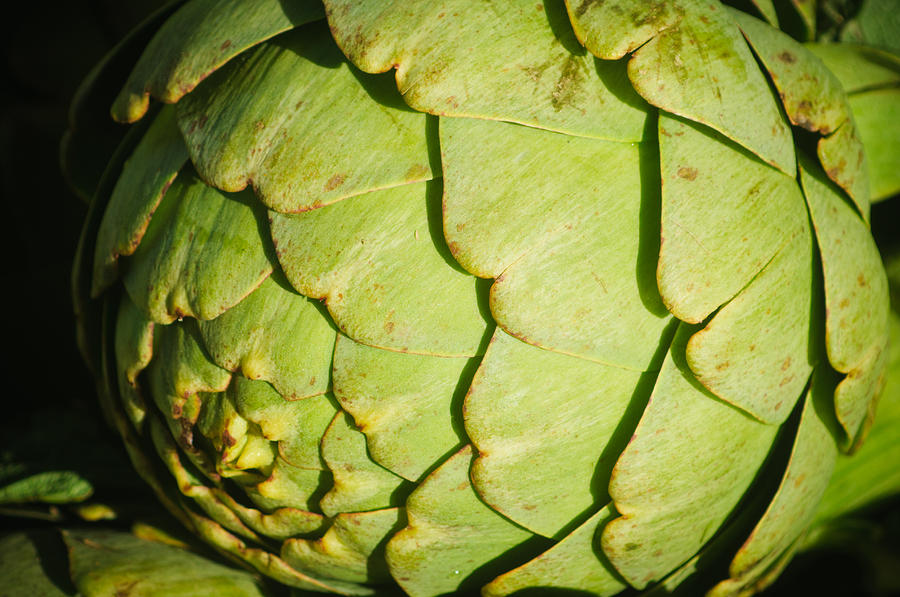 Harvest Photograph - Artichoke by Connie Cooper-Edwards