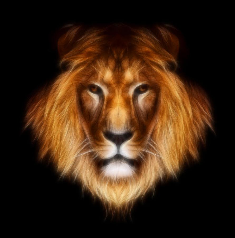 Artistic Lion Photograph