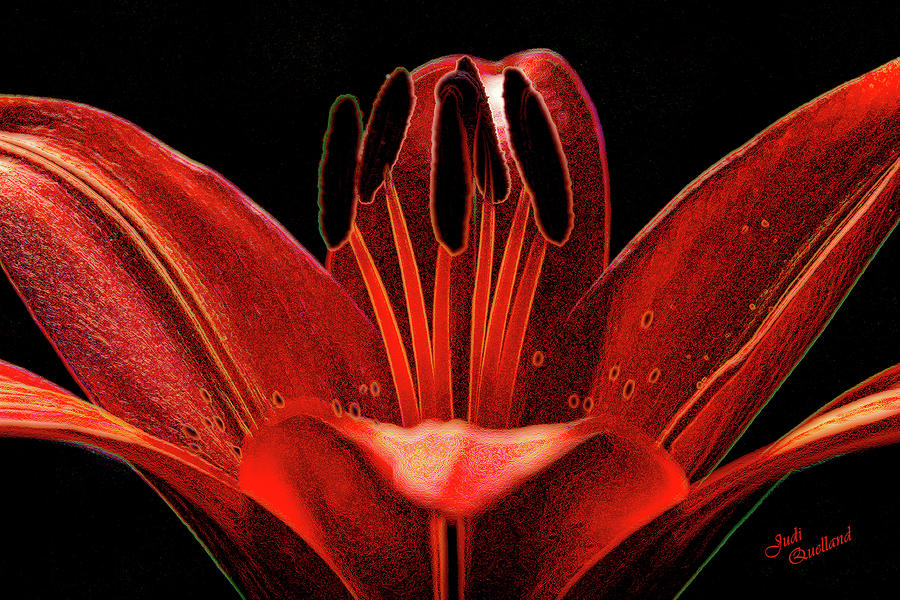 Artistic Red Pixie Asiatic Lily Photograph  - Artistic Red Pixie Asiatic Lily Fine Art Print