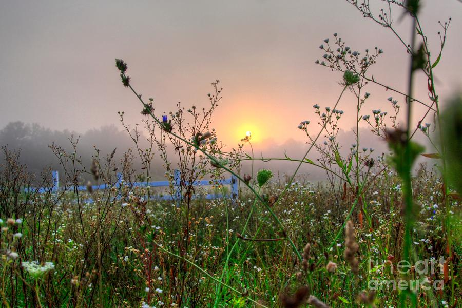 As Morning Comes Photograph  - As Morning Comes Fine Art Print