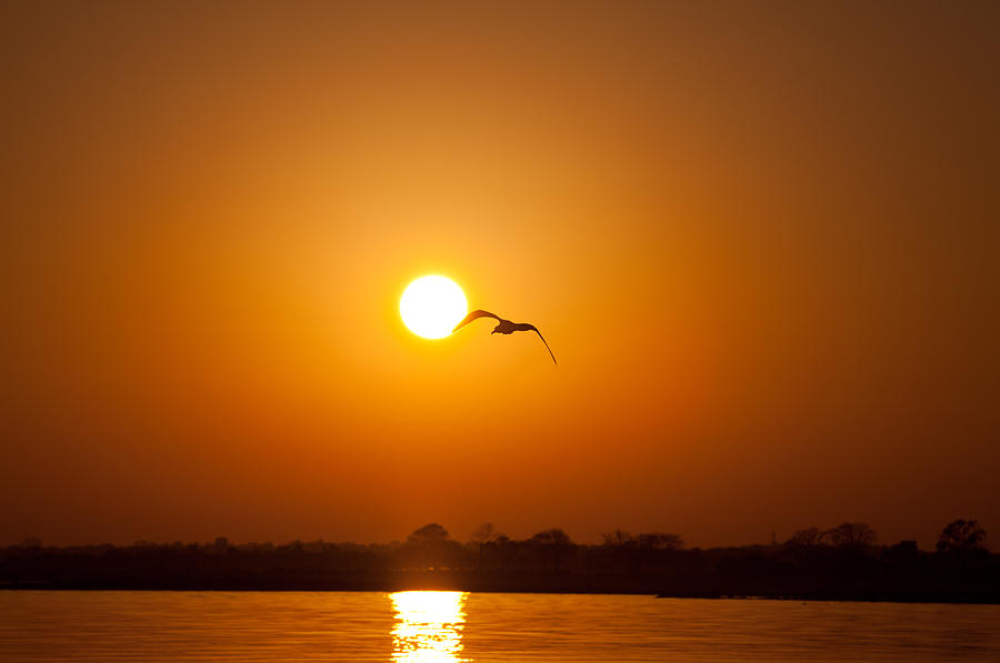 Sunset Photograph - As The Gull Glides by Karol Livote