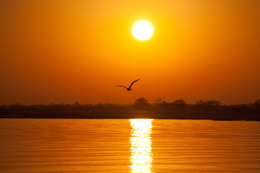 Seagull Photograph - As The Seagull Heads Home by Karol Livote