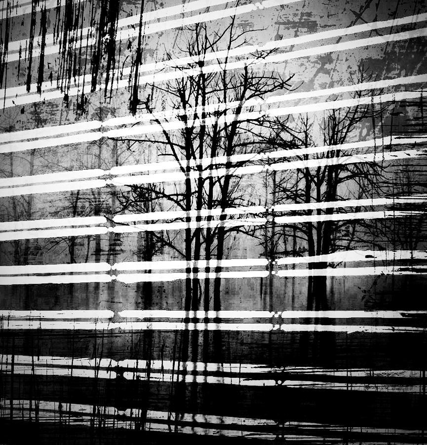 As The Swamp Sleeps Photograph