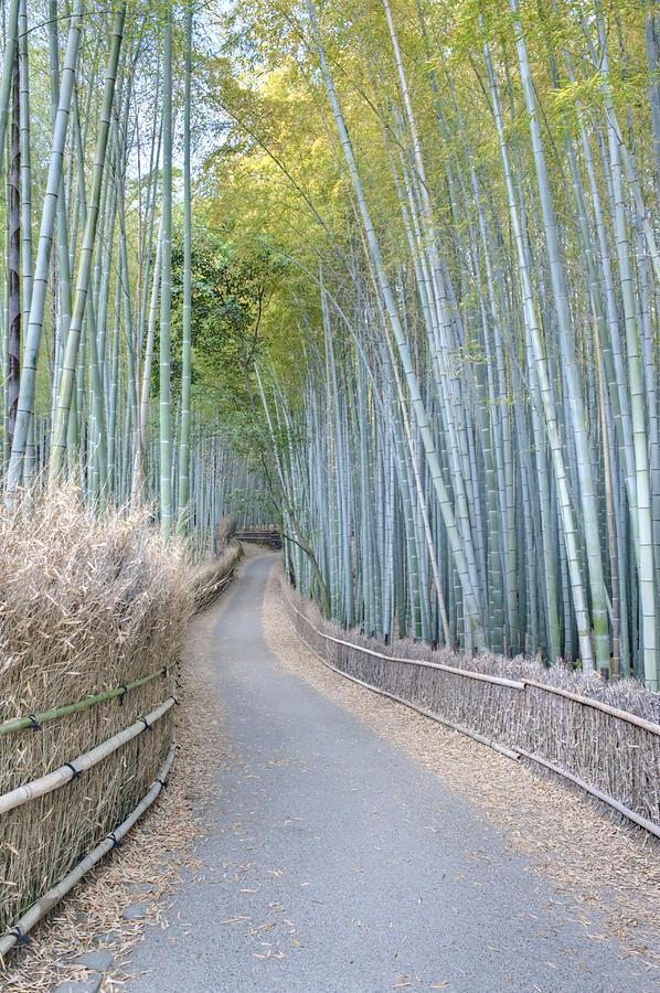 Asia Japan Kyoto Arashiyama Sagano Photograph