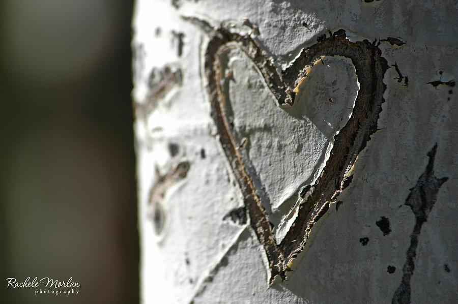 Aspen carving by rachele morlan
