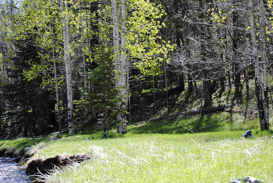 Aspen Creek By Jon Rossiter