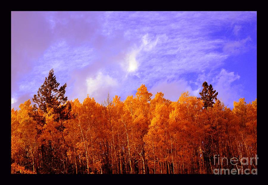 Aspen Meadows Photograph - Aspen Ridge In Western Light by Susanne Still