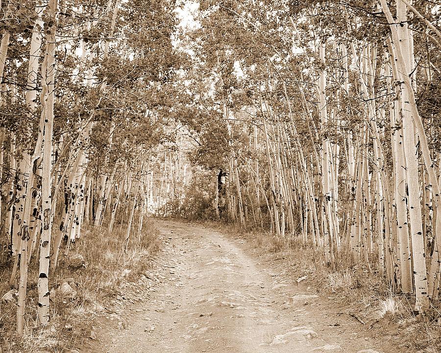 Aspen Road Photograph