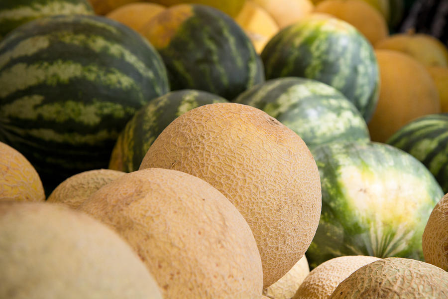 Assortment Of Melons Photograph  - Assortment Of Melons Fine Art Print