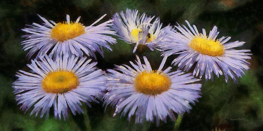Asters Painterly Digital Art  - Asters Painterly Fine Art Print
