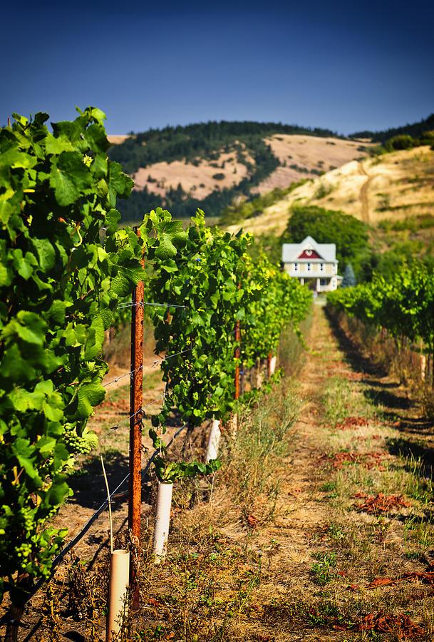Vineyard Photograph - At Home On The Vineyard by Vicki Jauron
