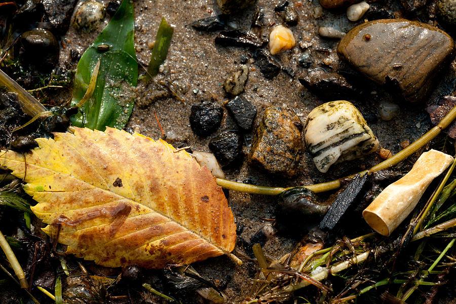 Leaf Photograph - Atres 3 by Karol Livote