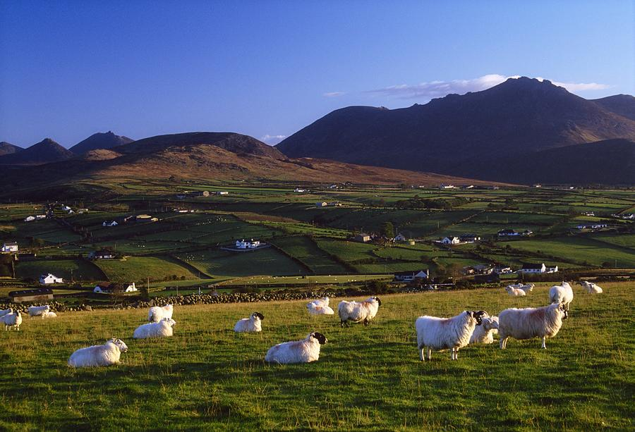 Aughrim Hill, Mourne Mountains, County Photograph