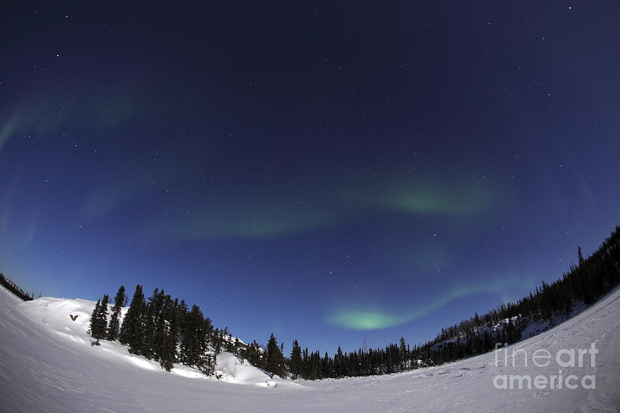 Aurora Over Vee Lake, Yellowknife Photograph